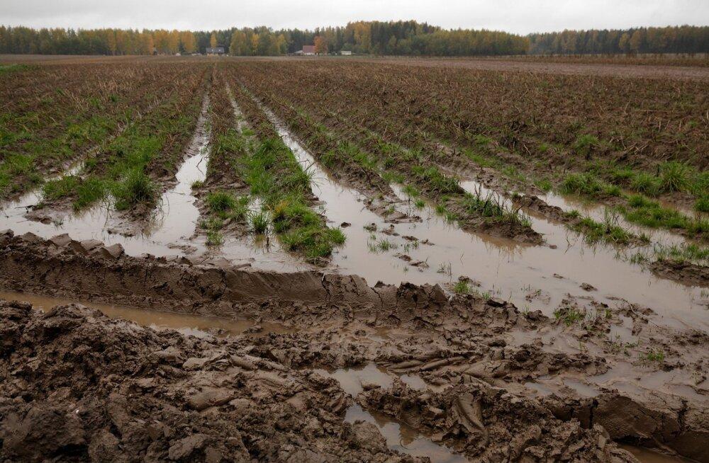 Osa kartuli- ja köögiviljakasvatajatest saab saagikadude eest toetust