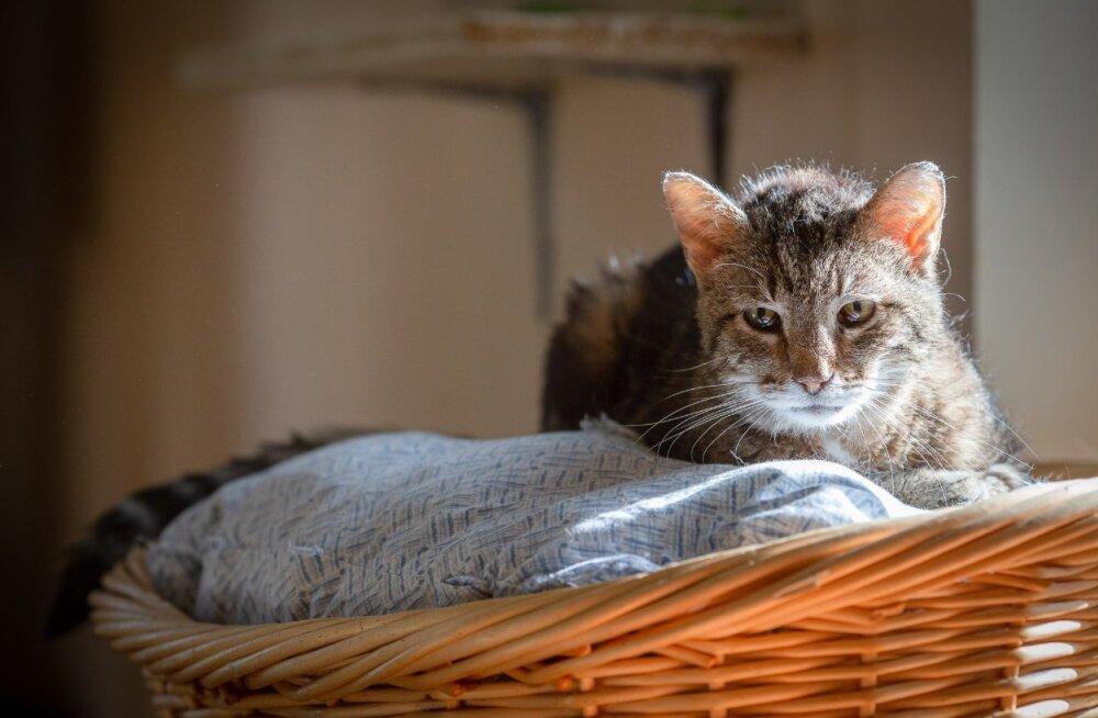 Kurb hüvastijätt: täna saadeti viimsele teekonnale Kassiabi kasside kaitseingel ja kõige kauem kodu oodanud kass Kotja