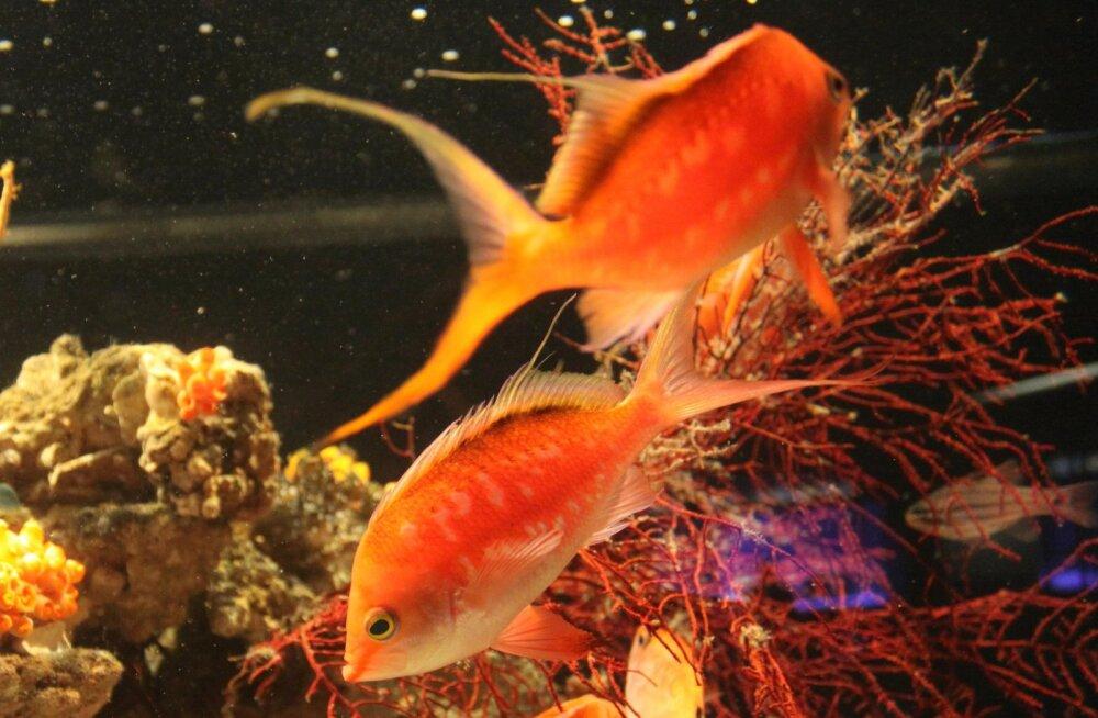 Akvaariumikala tervise esimene vaenlane on ületoitmine