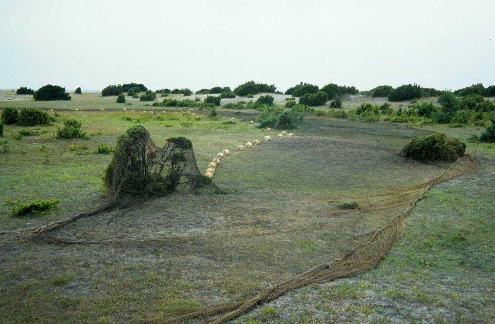 Kakuami-võrgud kuivamas kadakate vahel Kihnu heinamaal.