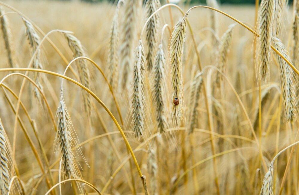 Investorite vaba raha tõstab kiiresti põllumaade hindu