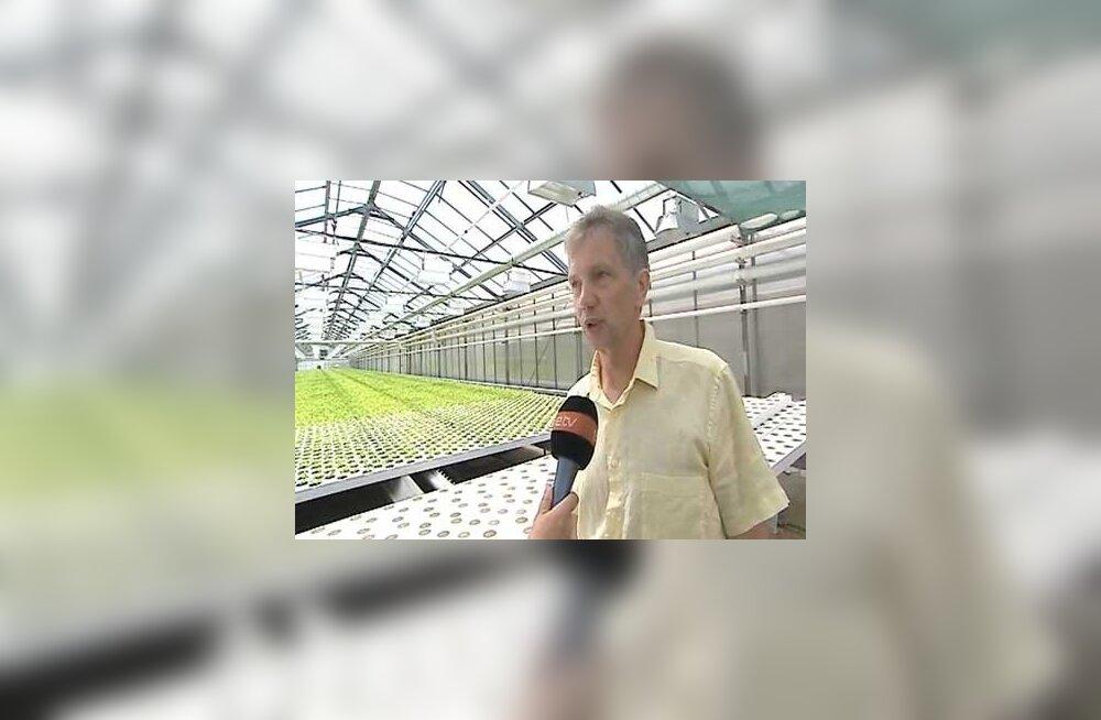 VIDEO: Grüne Fee tegevjuht: Võrdsus ei tule enne, kui toetused ära kaovad