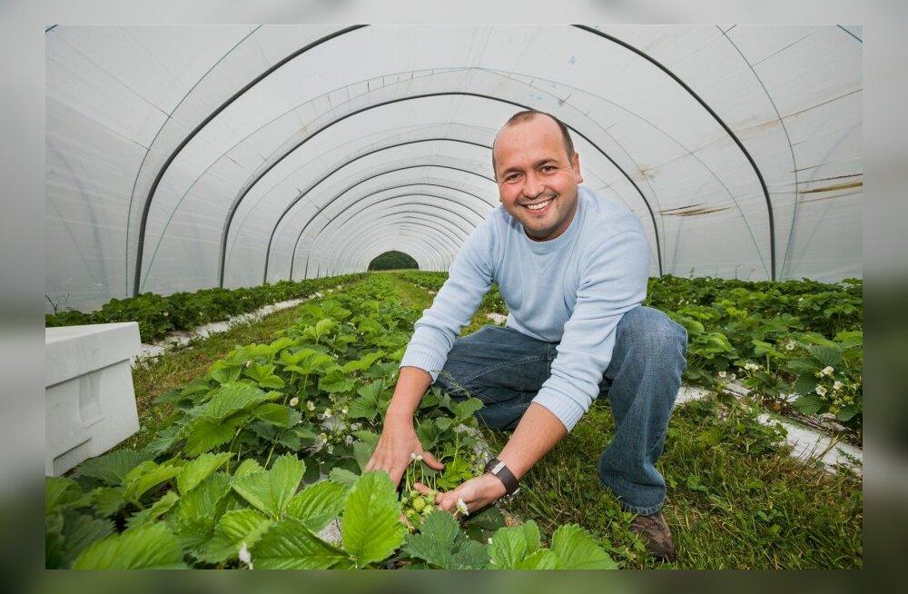 Eesti seisab maasikapöörde lävel
