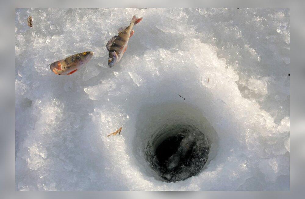 Parim kalapüügiaeg on enne jääminekut