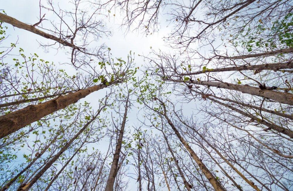 Uuringu tulemused näitavad, et kliimamuutustest mõjutatud metsad on intensiivselt muutumas, mis tähendab, et teisenenud on ka metsade võime talletada süsinikku.
