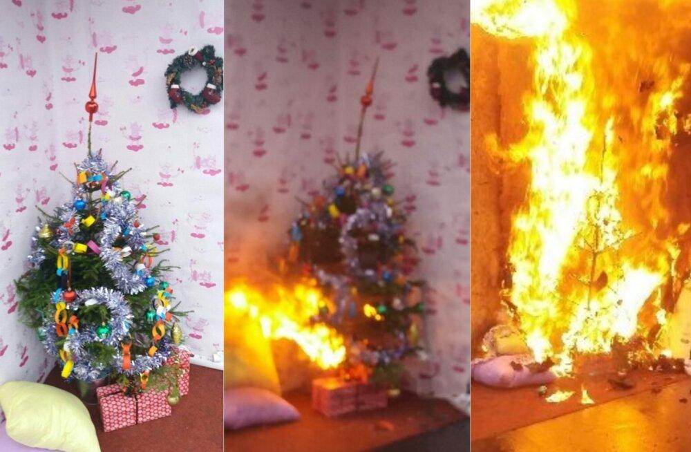 Правда или миф: действительно ли новогодняя елка может загореться?