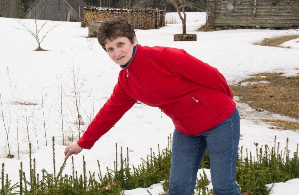 Riina Soots tegeleb palgatöö kõrvalt senini ka kuuseistikute kasvatamisega.