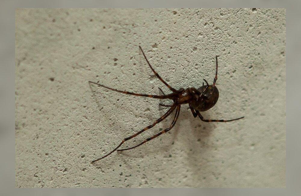 Nagu Zeus: ämblike lendamisel on elektrilised tagamaad