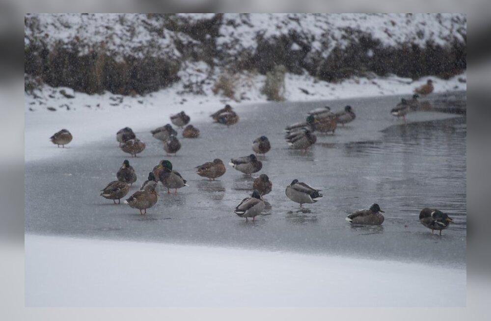 Каток на пруду Шнелли закрыт: выходить на лед опасно!