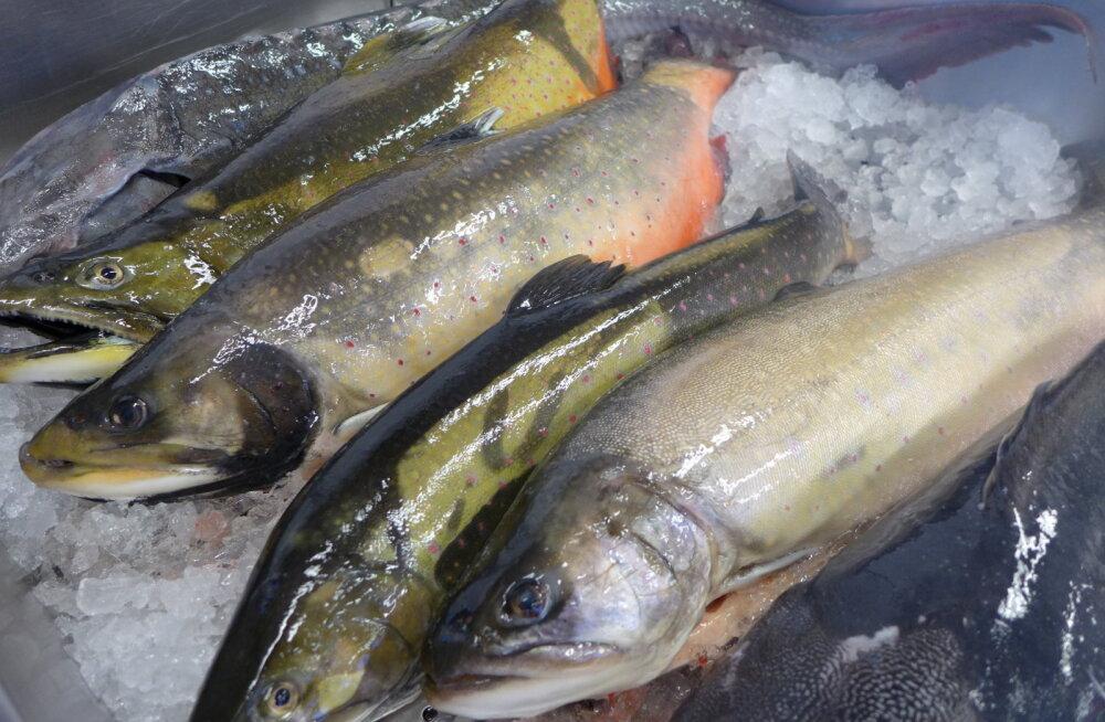 Peoroog jõululauale: maitsev ja tervislik kala