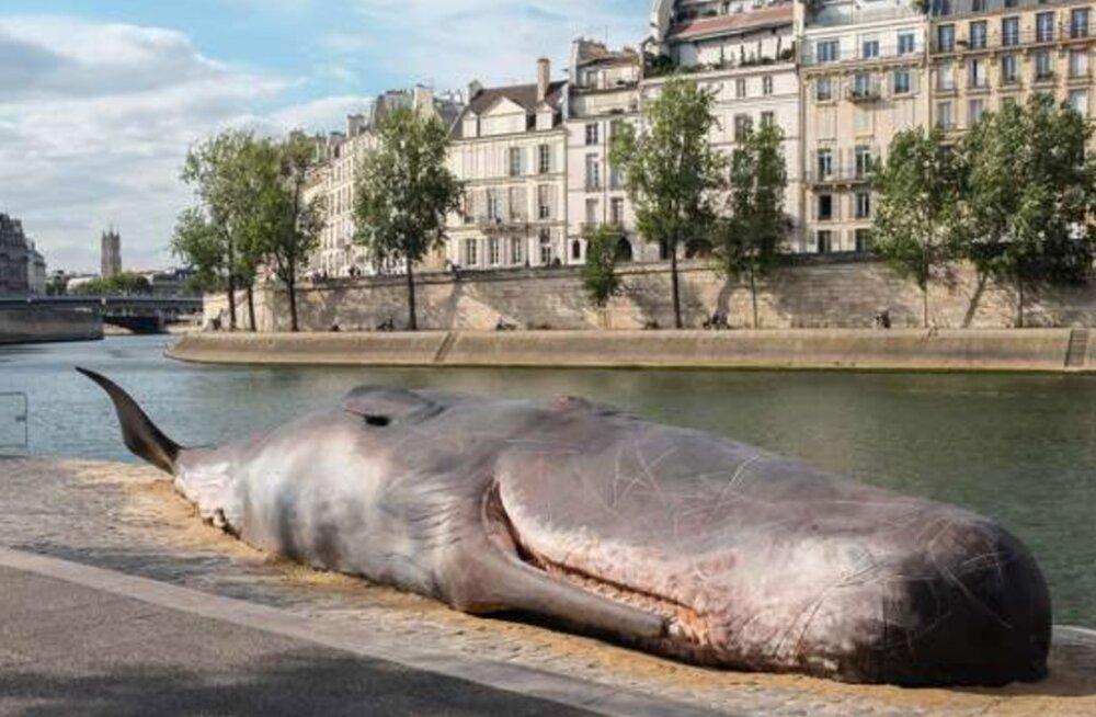 Suurepärane maskeering | šokeeritud möödujad leidsid Seine jõe kaldalt surnud vaala