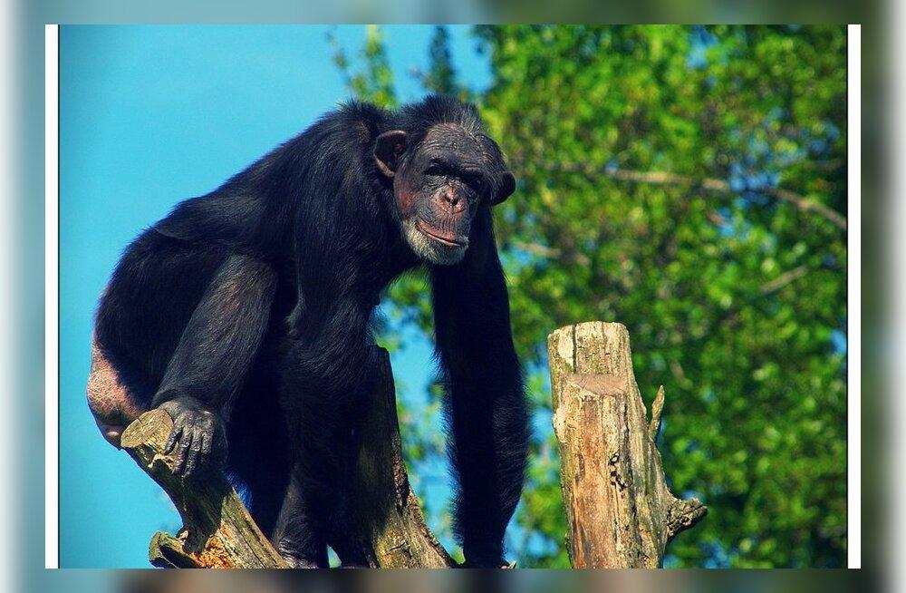 Ka ahvid ja röövikud teavad, mis ravimtaim mida ravib