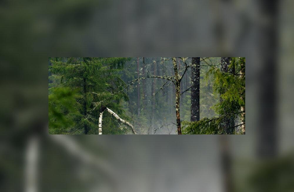 Eestlaste teadlikkus metsades toimuvast jätab soovida