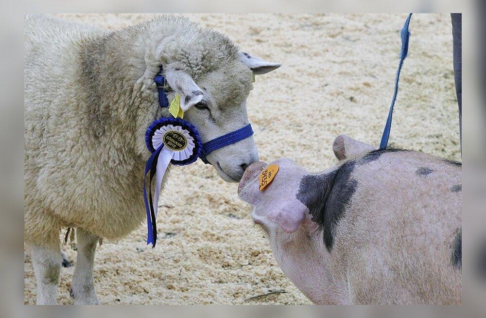 FOTOD: Loomad olid lausvihmas kannatlikud