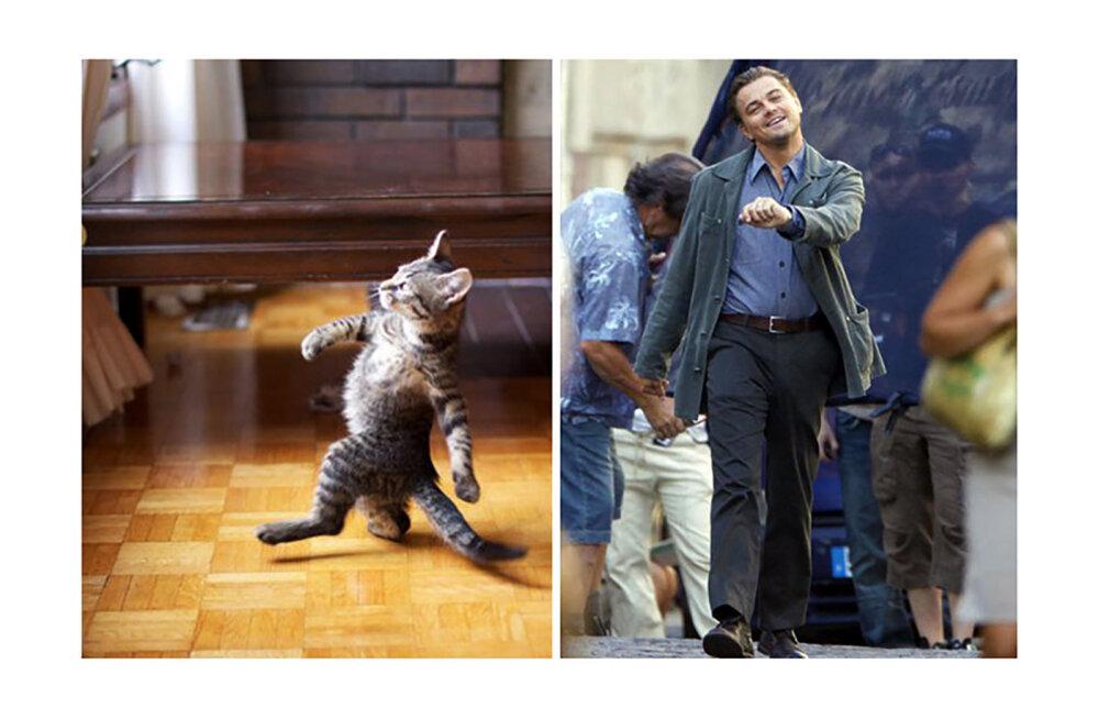 NAGU KAKS TILKA VETT | Paljastavad fotod toovad esile jahmatavad sarnasused inimeste ja loomade vahel