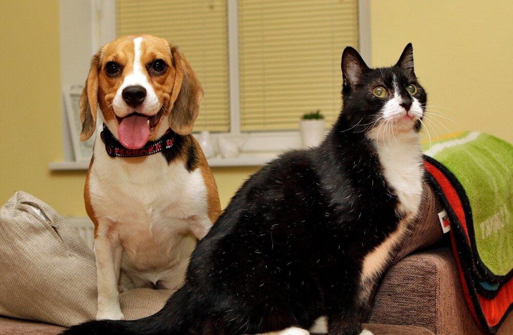 14 sammu: Kuidas tutvustada kassi ja koera?