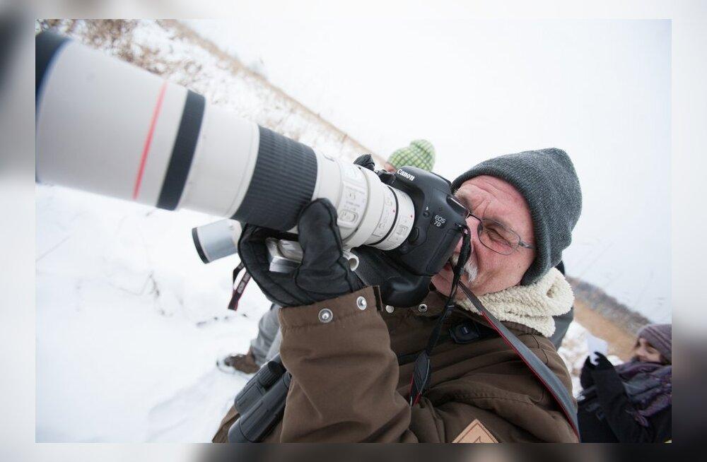 VIDEO ja FOTOD: haruldane tiivuline tõi kuulsa Rootsi linnuvaatleja Eestisse