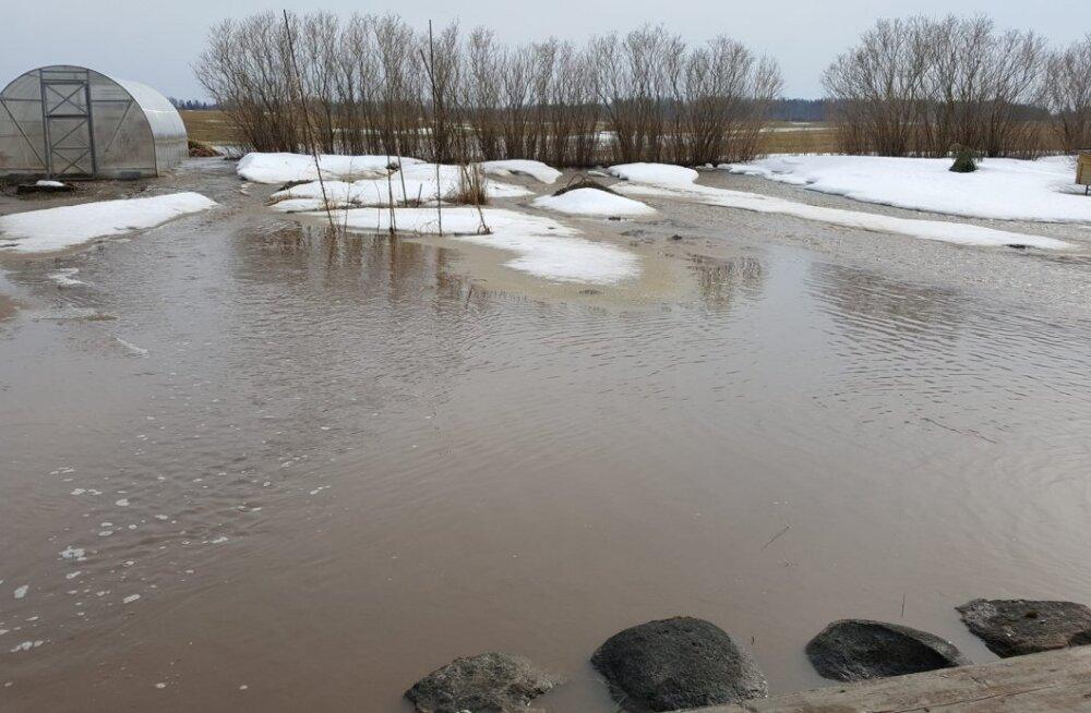 VIDEO JA FOTOD   Lumesulavesi tormas sellise hooga läbi hoovi, et tahtis pererahval jalad alt niita