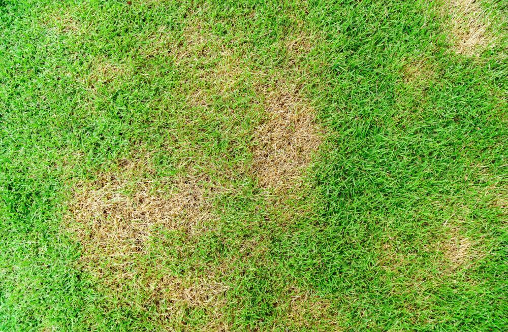 Vaata, millist seemnesegu kasutada kevadel murukahjustuste parandamiseks