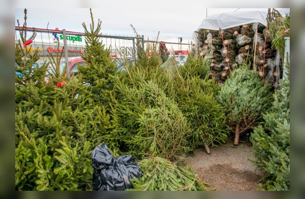 Jõulukuuskede müük kaubanduskeskuste parklates