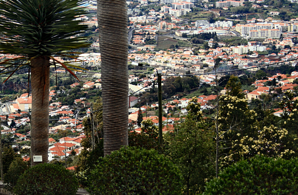 Elu Madeiral: esimesena suundume kohaliku elu keskpunkti ehk turule