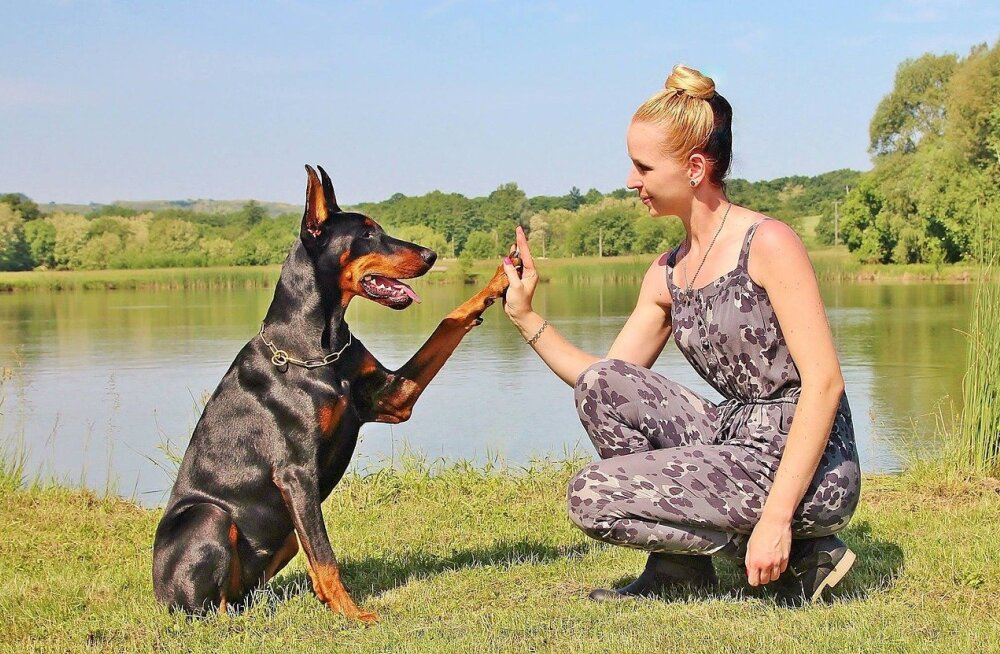 Koer läheb omaniku nägu ja on sinu peegeldaja. Miks ja kuidas ta seda teeb?
