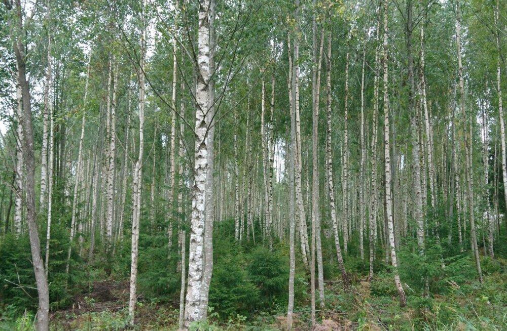 Noore metsa hooldamiseks makstakse 1,5 miljonit eurot