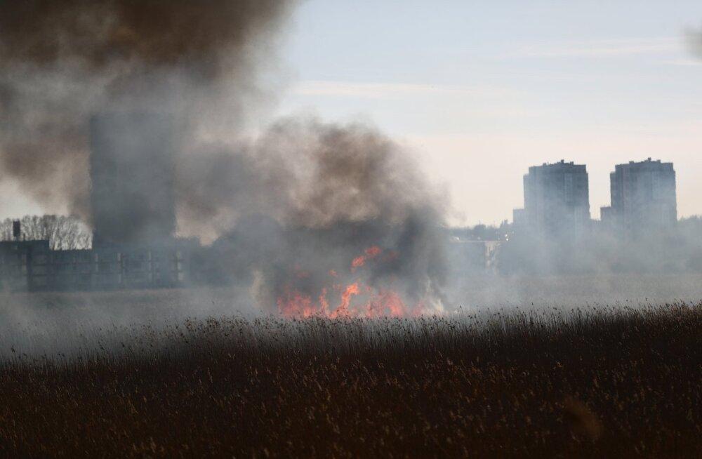 ФОТО: Рядом с Rocca al Mare горит сухая трава, дым направляется в сторону Ыйсмяэ