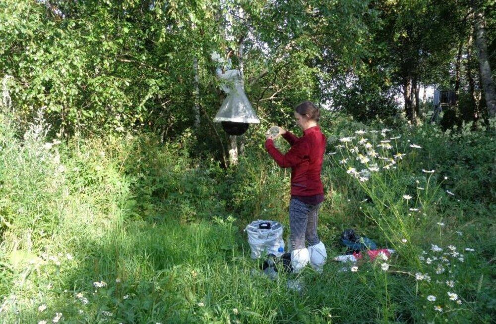 Seakatku võivad metsast farmidesse kanda sääsed ja parmud