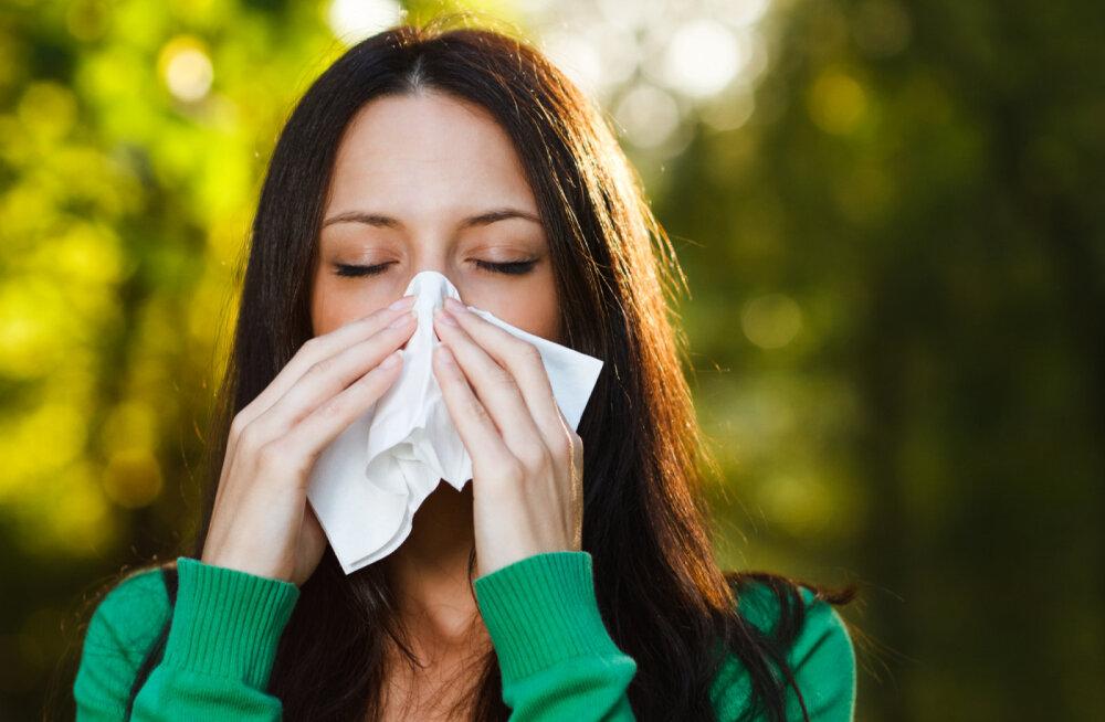 Tüütu nohu: tõhusad looduslikud nipid kinnise või tilkuva nina raviks