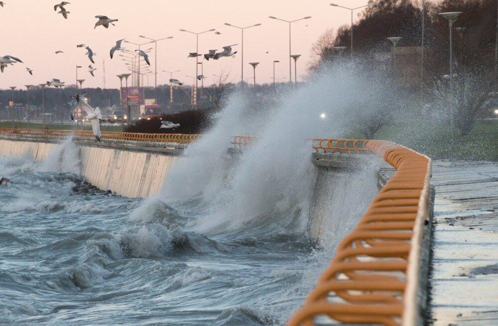 Tuuline ilm Pirita teel
