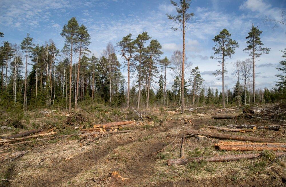 Toomas Jürgensteini vastukaja ökoriigile: inimeste heaolu on tähtsam kui radikaalne vastuhakk metsaraiele