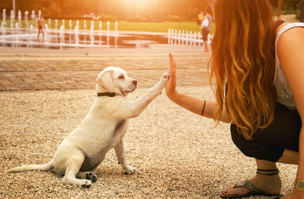 Loomade eestkostjad: Eesti on tegemas olulist sammu loomasõbralikuma riigi suunas