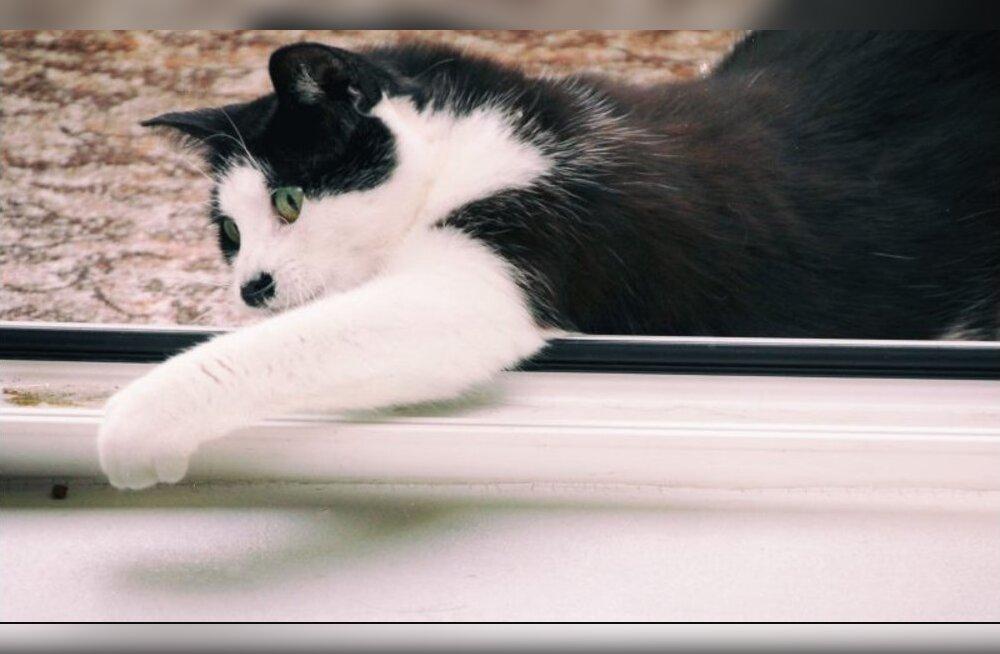 Üksik hing | Viimasel hetkel surmasuust päästetud võimsa välimusega kass otsib uut ja armastavat perekonda