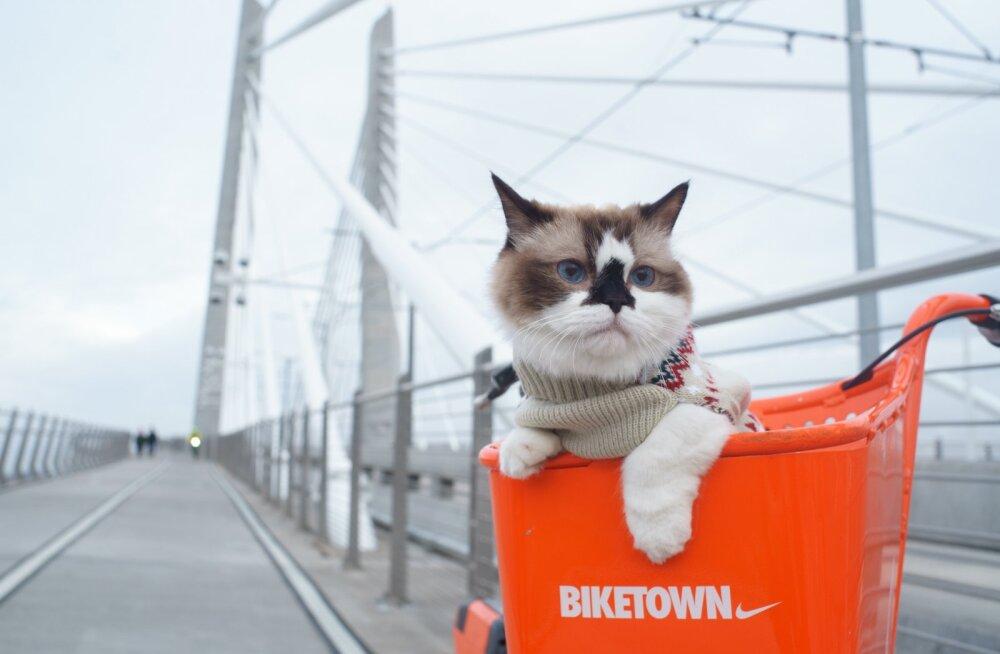 30 FAKTI: Põnevad tõsiasjad kasside kohta, mis panevad nii mõnegi üllatuma