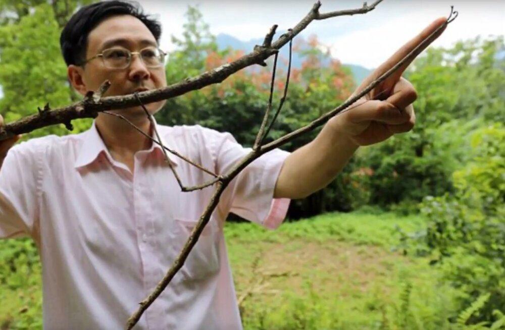 Hiinlased kasvatasid muuseumis maailma pikima putuka