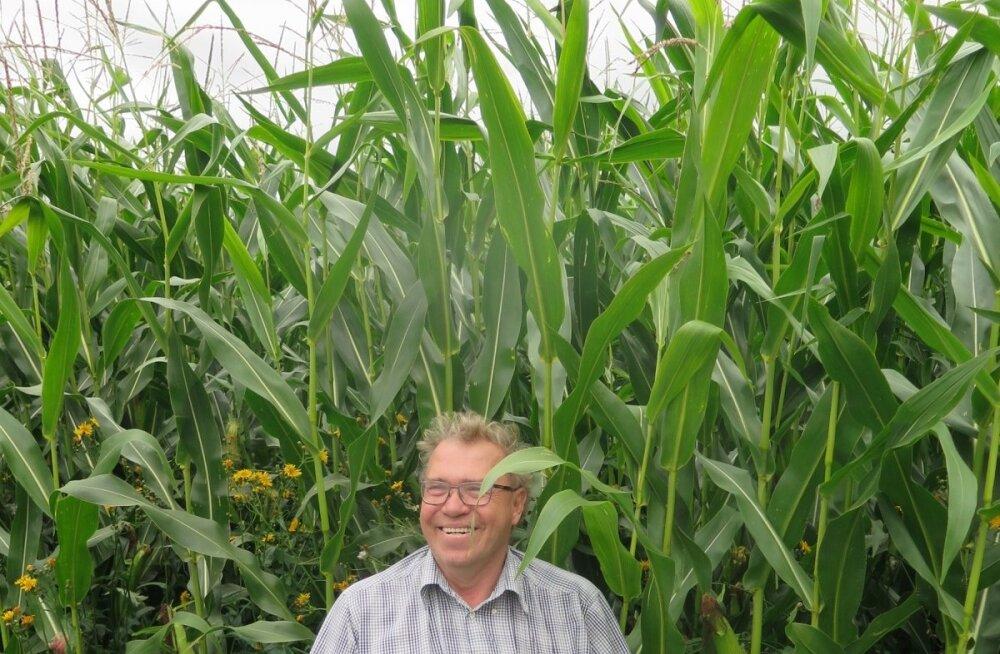 Urmas Uustalu oskab kasvatada ülikõrgeid saake iga viljaga ja igal pool.