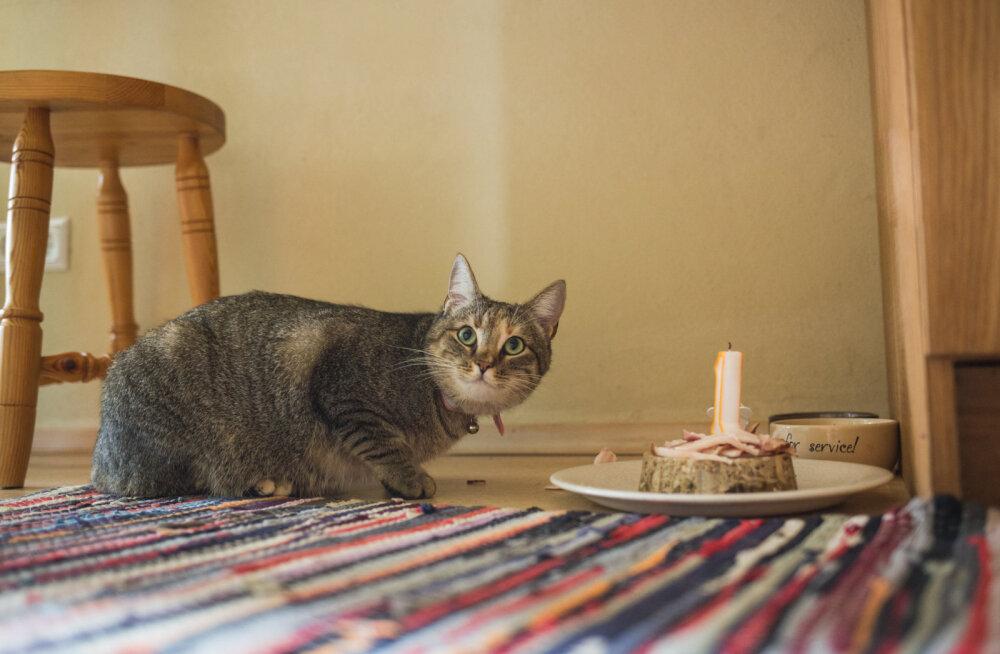 PALJU ÕNNE: Vaata, millisel kuninglikul moel kass oma esimest sünnipäeva tähistab