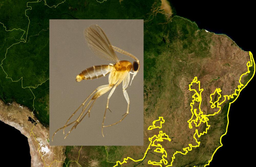 Maaülikooli teadlase juhtimisel avastati Brasiiliast 20 uut sääseliiki