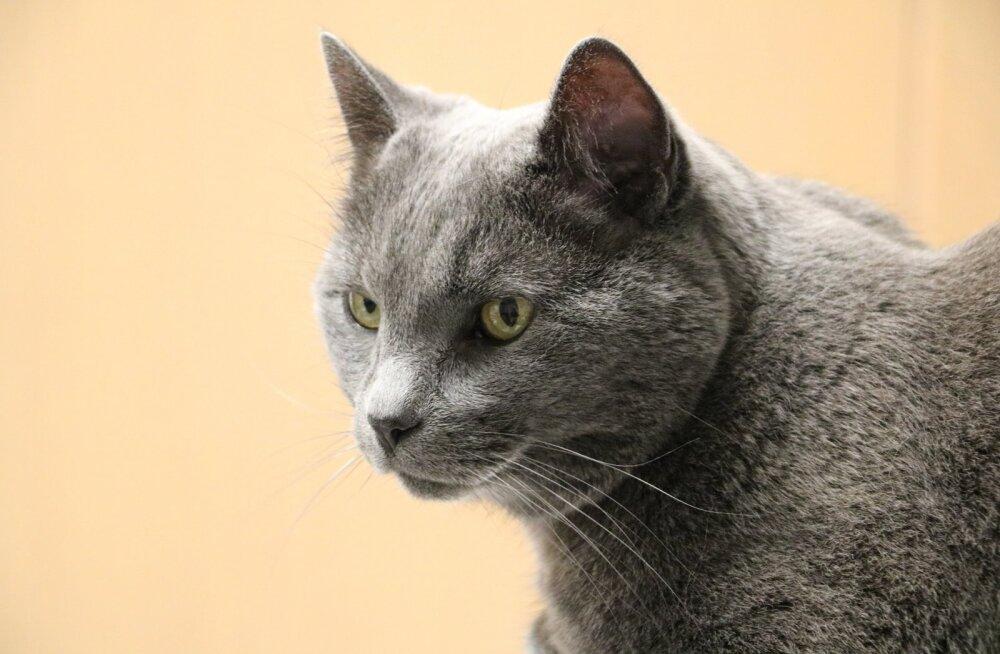 PANE TÄHELE | 5 nõuannet oma eaka kassi eest hoolitsemiseks