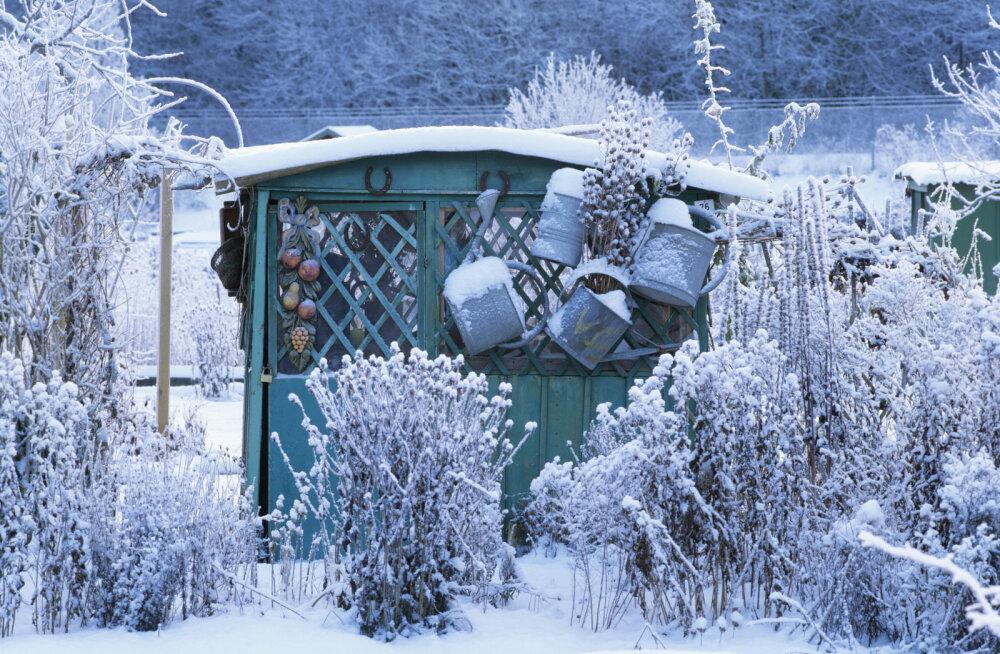 Millised on need tosin aiatööd, mis ei lase lumises aias hinge tõmmata