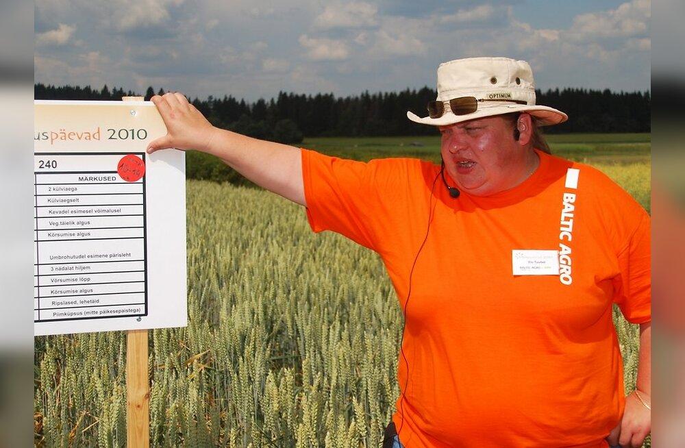 Tänavune võistuviljelus vaid rapsi ja nisuga