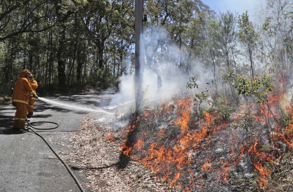 Austraalias pistavad röövlinnud rohumaadele ja võsale tahtlikult tule otsa