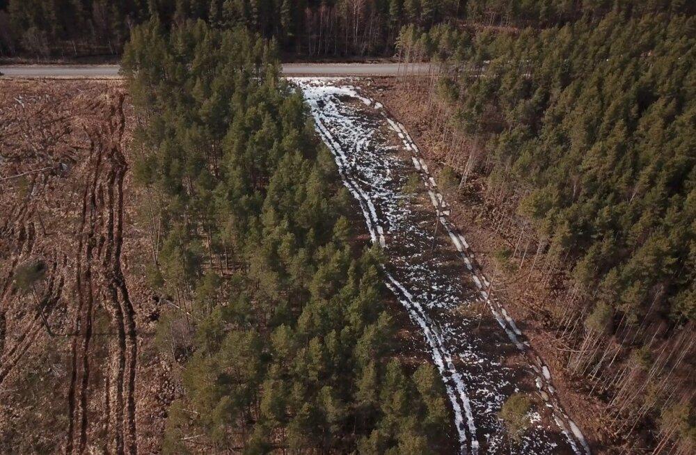 Läänemaal Haeskas asuv mets