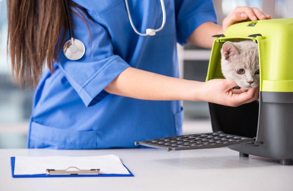 Lemmikloomade kiibistamise ja registreerimise kohustuslikuks muutmist pooldavad paljud omavalitsused
