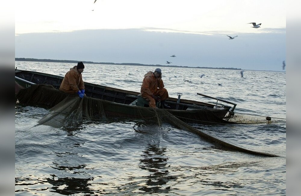 Merebioloog: Läänemere kala võib rahuliku südamega süüa