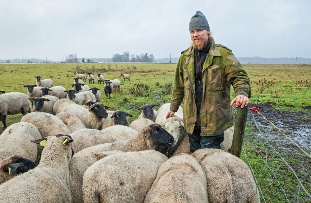 Priit Hinto on lammaste kaitseks aedu ehitanud ja loodab edaspidi selleks ka hüvitist saada.