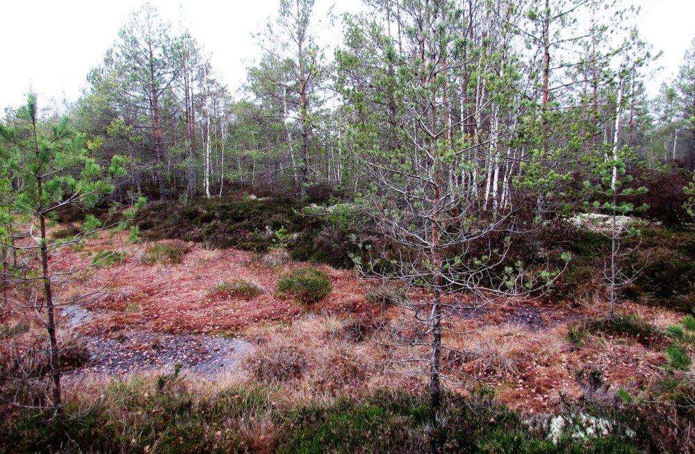 Leili metsalood | Kaitsealused rabamaastikud