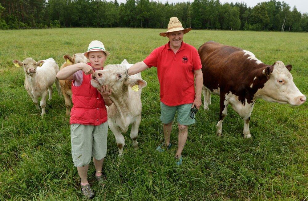 """""""Lihaveised toodavad tagasi selle, mis oleme neisse panustanud, karjamaad on korras ja oleme midagi ilusat teinud,"""" on Reet ja Targo Pikkmets rahul, ei jäta aga lisamata, et eurotoetusteta oleks nende loomapidamine kahjumis."""