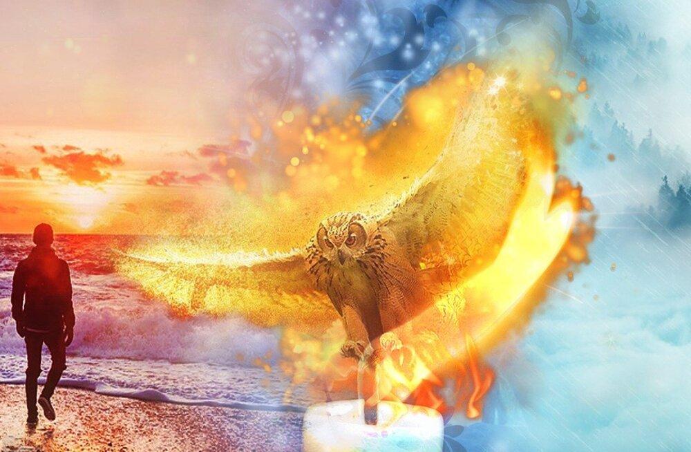 Тайна золотой совы: во Франции 25 лет ищут спрятанное сокровище